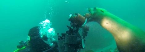 Seal Lion Camera